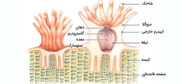 ساختار مرجان دریایی
