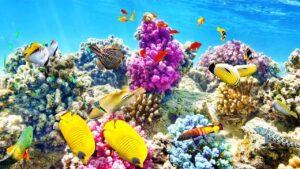 مرجان چیست ؟ — زیست شناسی به زبان ساده