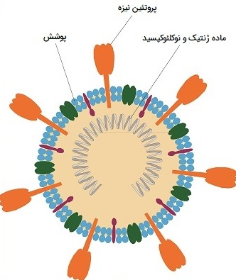 ساختار ویروس کرونا