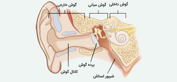 آناتومی گوش انسان