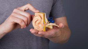 گوش انسان — آناتومی، ساختار، عمکرد و اجزا به زبان ساده