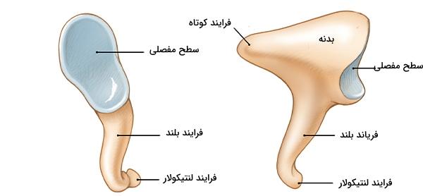 استخوان سندانی