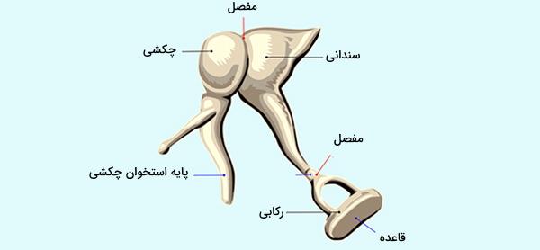 استخوان های گوش
