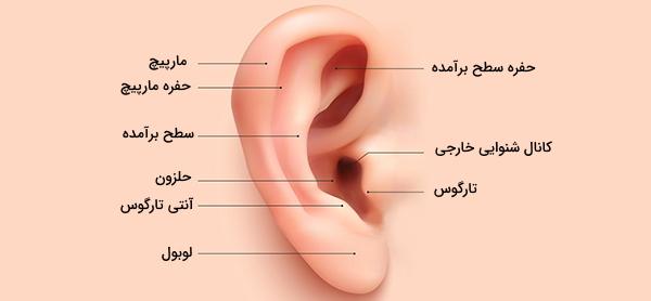 گوش خارجی
