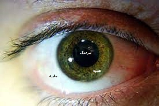 مردمک چشم انسان