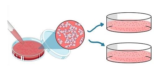 پاساژ سلولی