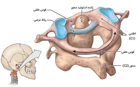 استخوان مهره اطلس و محور