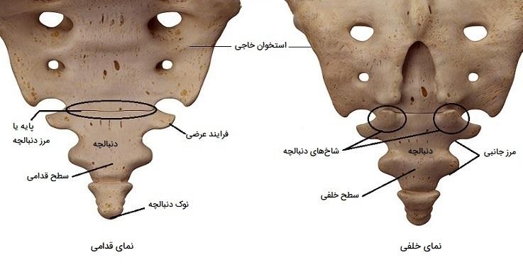 استخوان دنبالچه