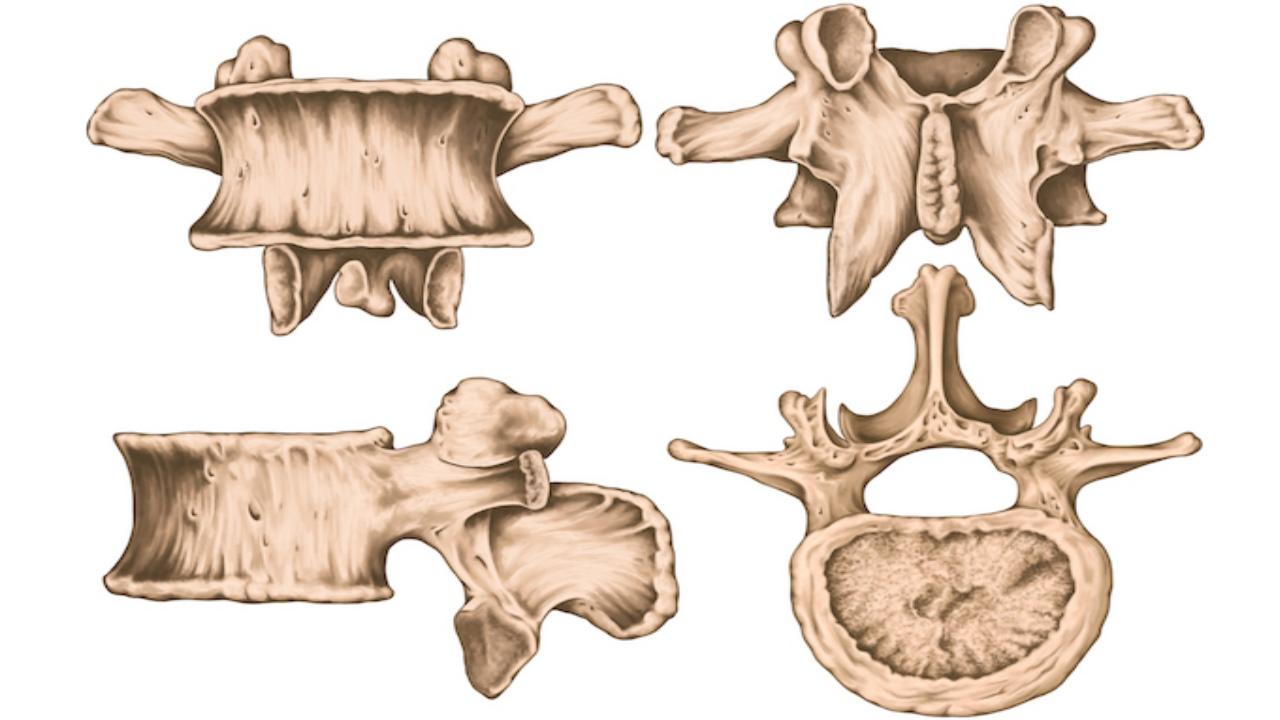 استخوان مهره چیست ؟ — انواع، ساختار، آسیب ها و درمان — آنچه باید بدانید