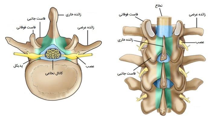 آناتومی استخوان مهره